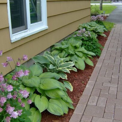 Hostas and columbine Landscape Hosta Design Ideas Pictures