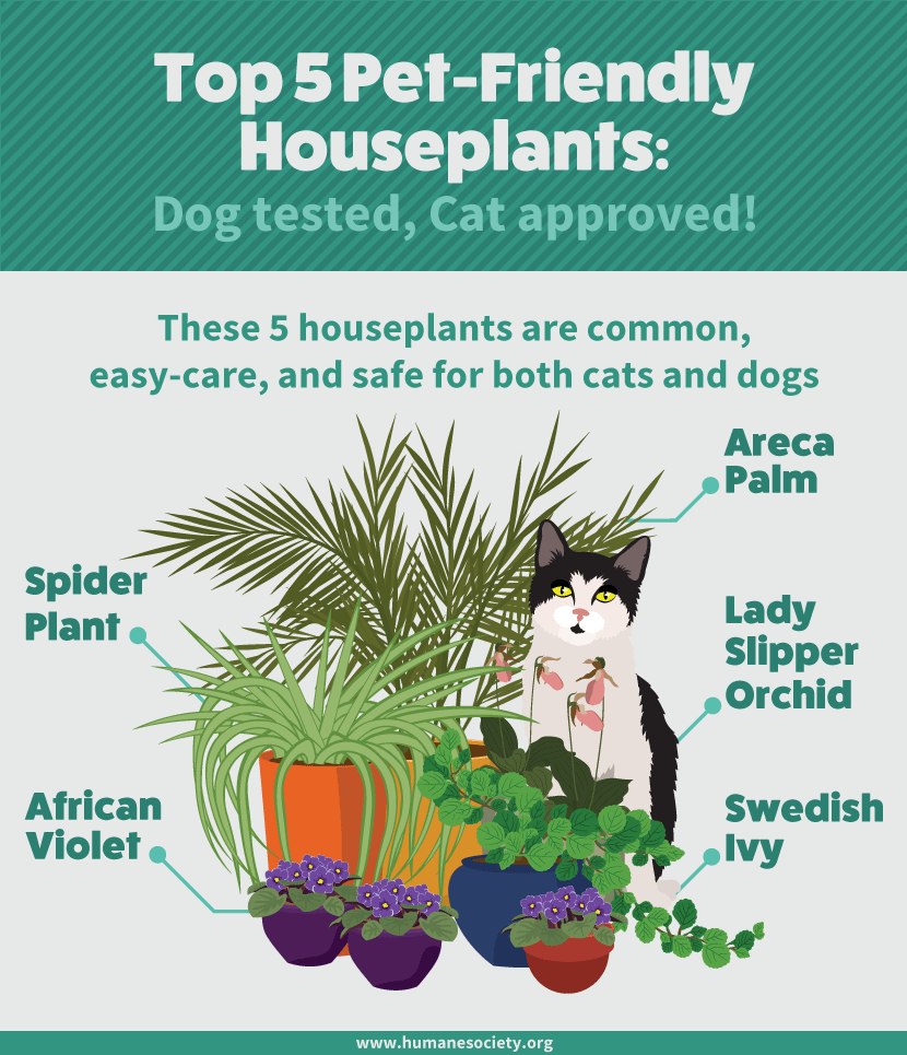 How To Grow Houseplants That Won T Hurt Your Cat Or Dog Freshome