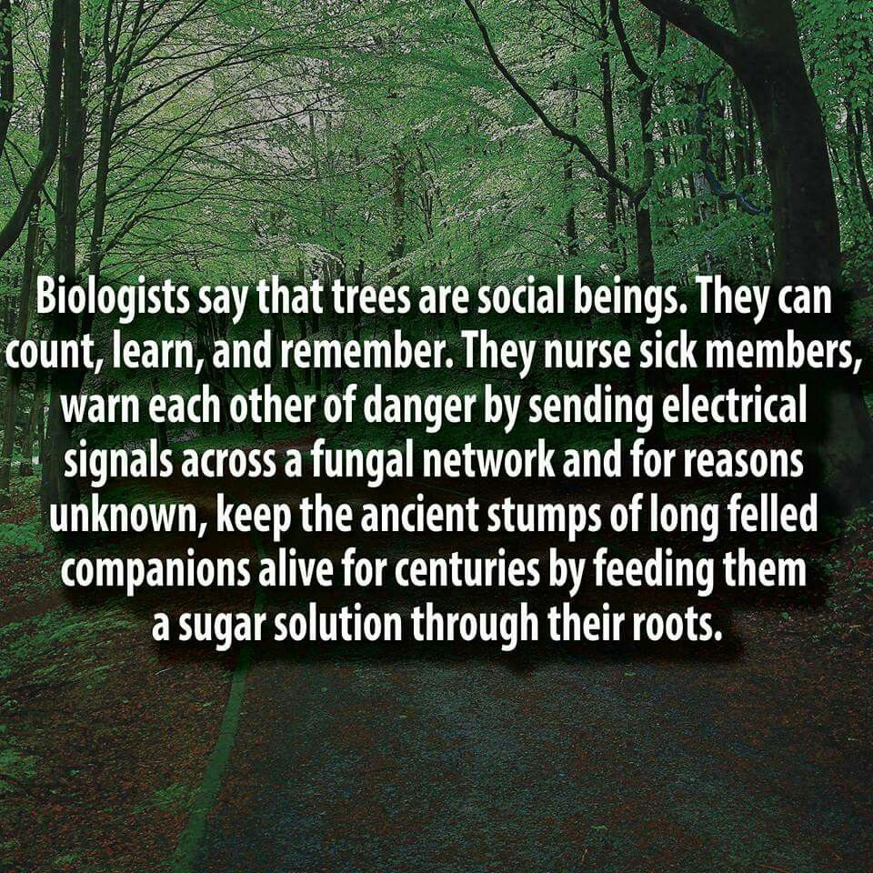 Biologists Say That Trees Are Social Beings No Link To The