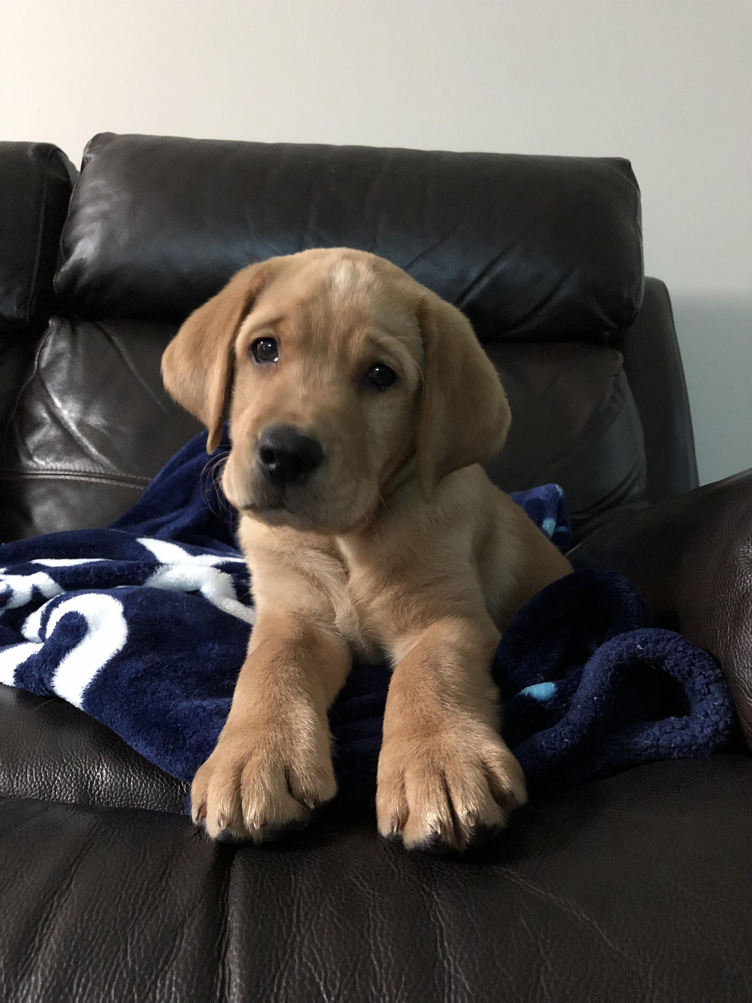 Them Some Big Paws Moose Please Donate Us Hello There Bright People Are You Doglover Or Have You Any Pre Labrador Retriever Lab Puppies Cute Baby Animals