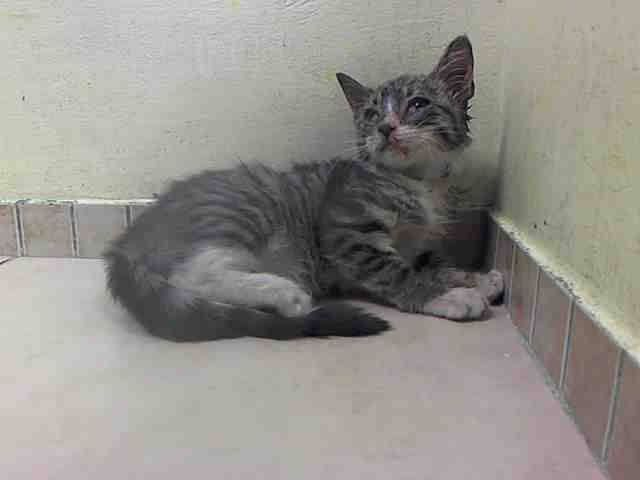 TO BE DESTROYED 8/19/14 ** BABY ALERT! ONLY 12 WEEKS OLD