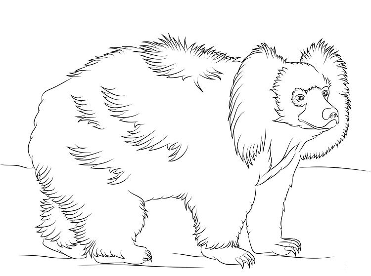 Sloth Bear Coloring Pages With Images Bear Coloring Pages