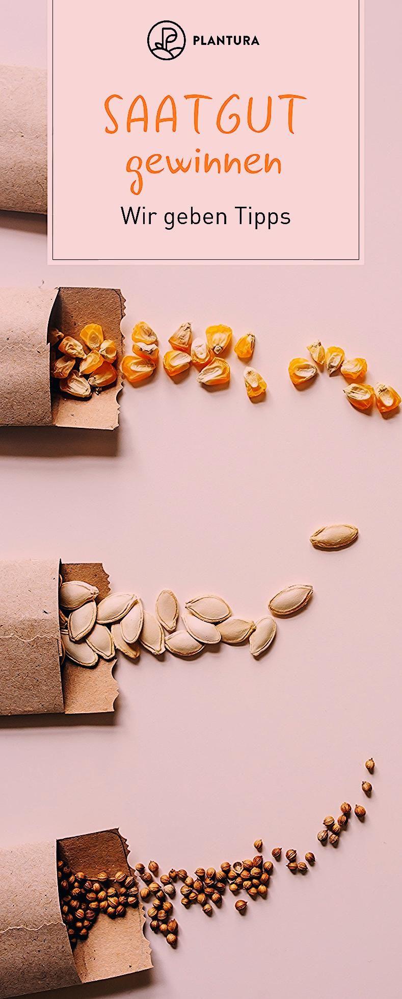Photo of Saatgut für das nächste Jahr gewinnen – Plantura