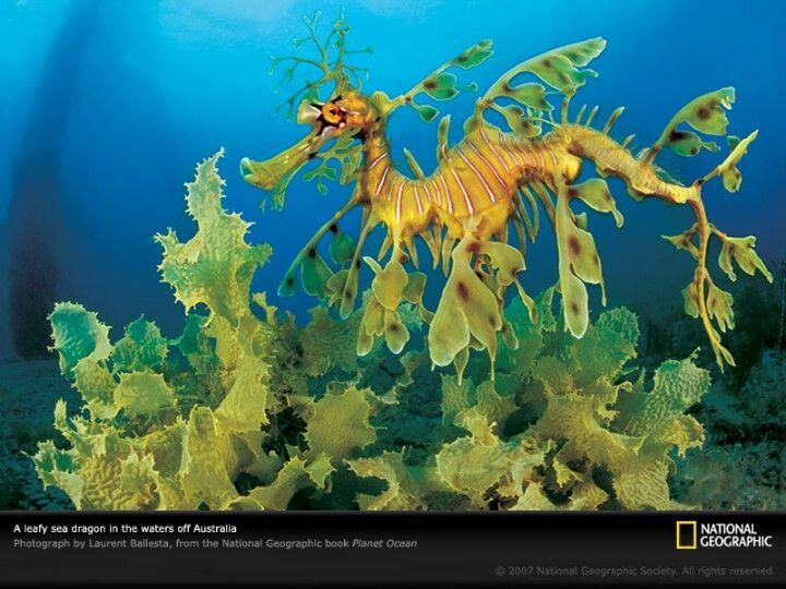 Most unusual seahorse