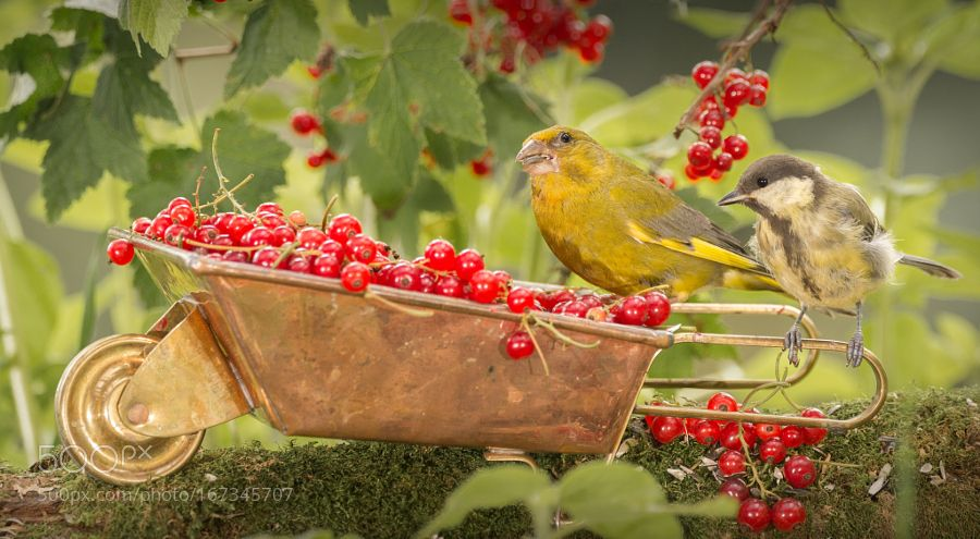 currant brothers by geertweggen