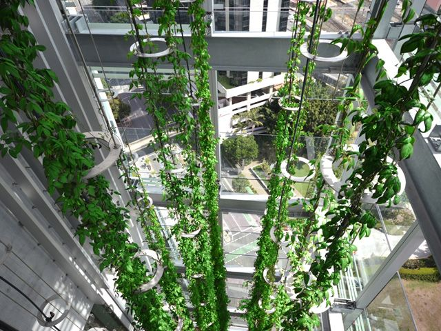 Vertical Climbing Plants Find A Home In Cable Trellis