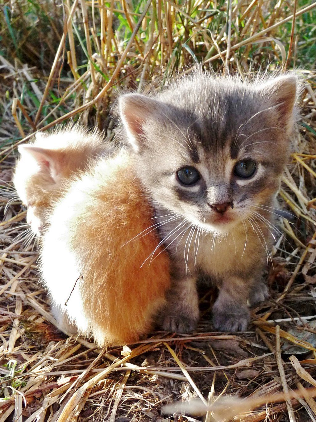 Chaton Kitten By Photoscrystaljones Cute Little Animals Kittens Cutest Pretty Cats