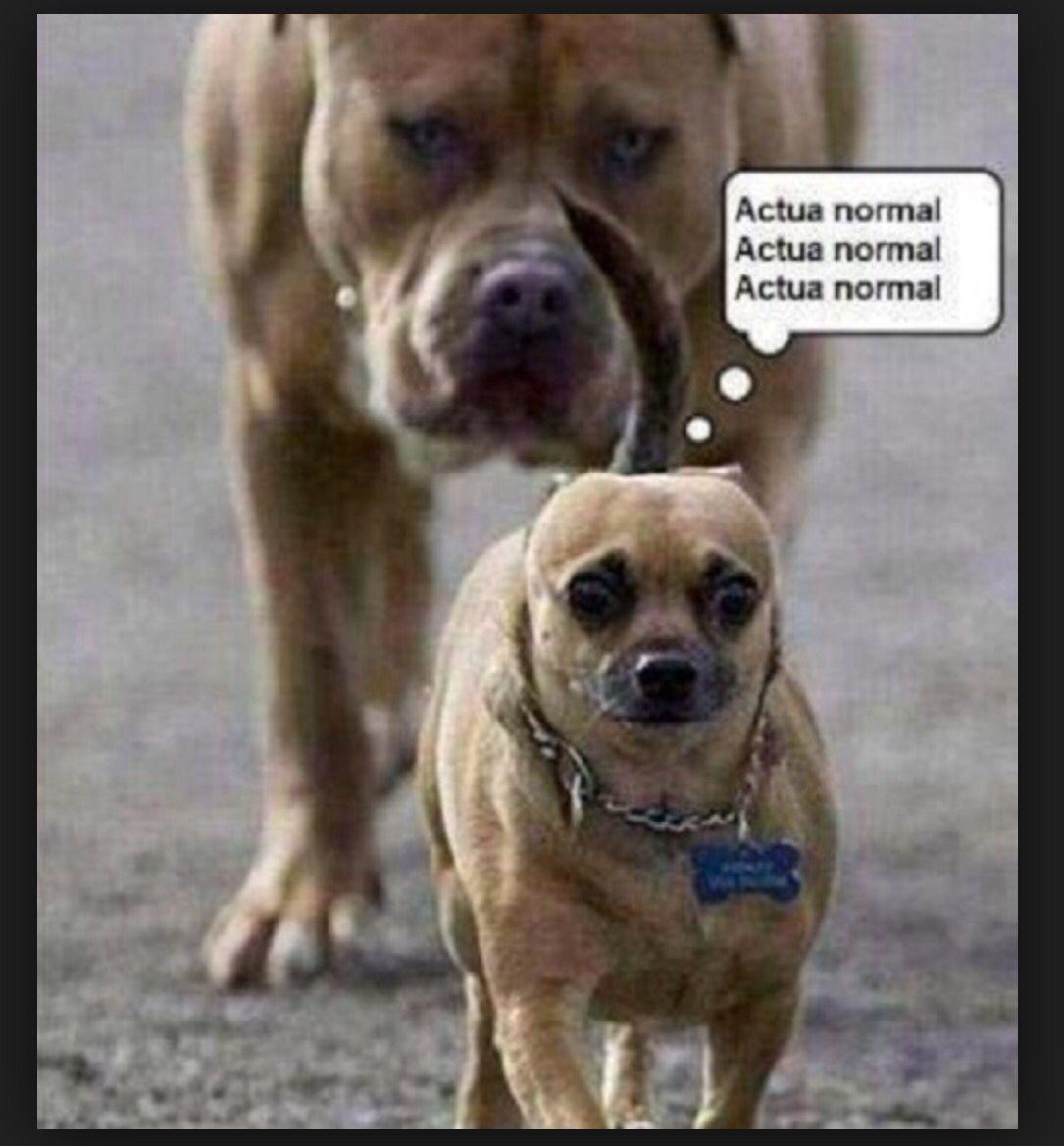 20 Divertidos Memes De Perros Que Te Haran Llorar De Risa Memes Perros Imagenes Divertidas De Animales Humor De Perros