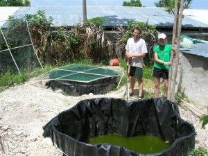 home fish farming | Fish farming, Farm, Aquaponics
