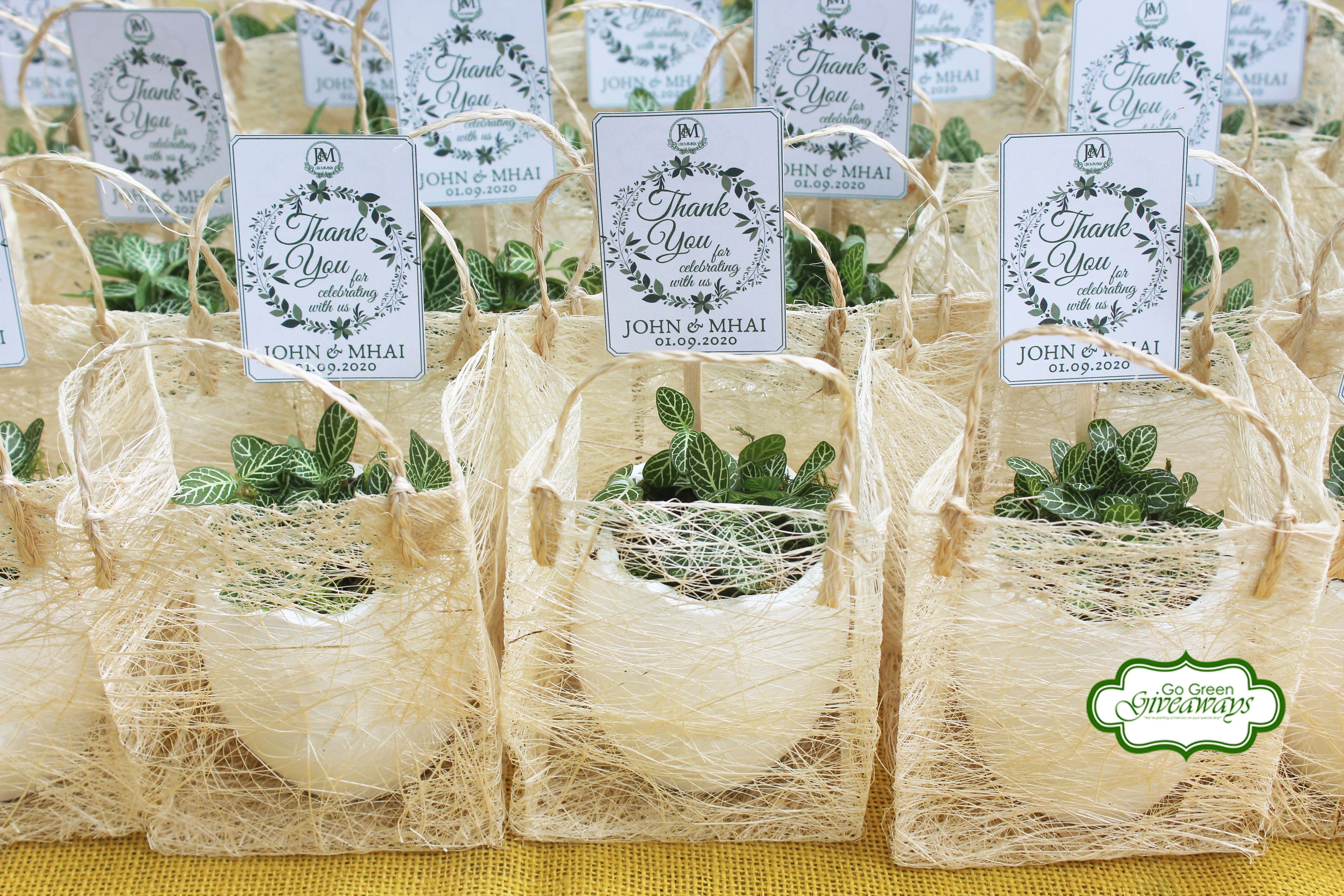 John And Mhai Fittonia Wedding Favors In 2020 Wedding Favors Plant Wedding Favors Wedding
