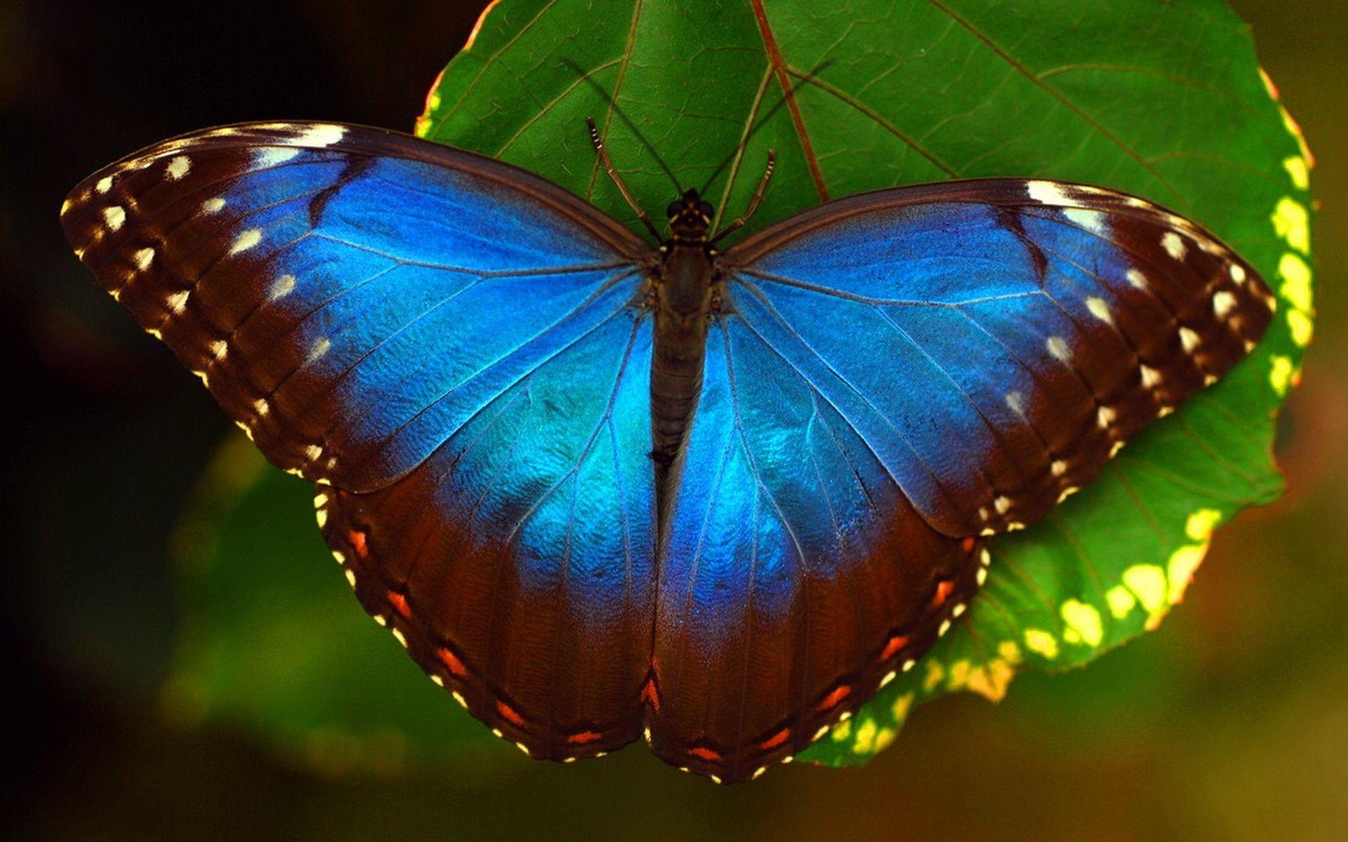 Обои мир бабочек, красота, цветок. Макро foto 6