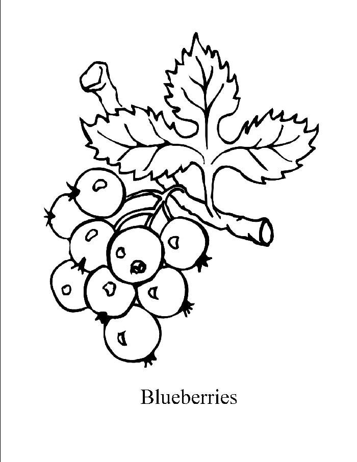 blueberry coloring pages - photo #3
