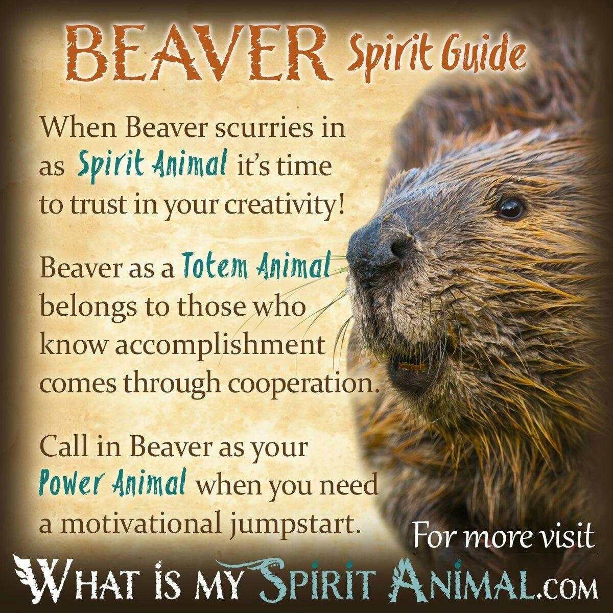 Beaver meaning fox symbolism beaver animal wood badge animal spirit guides