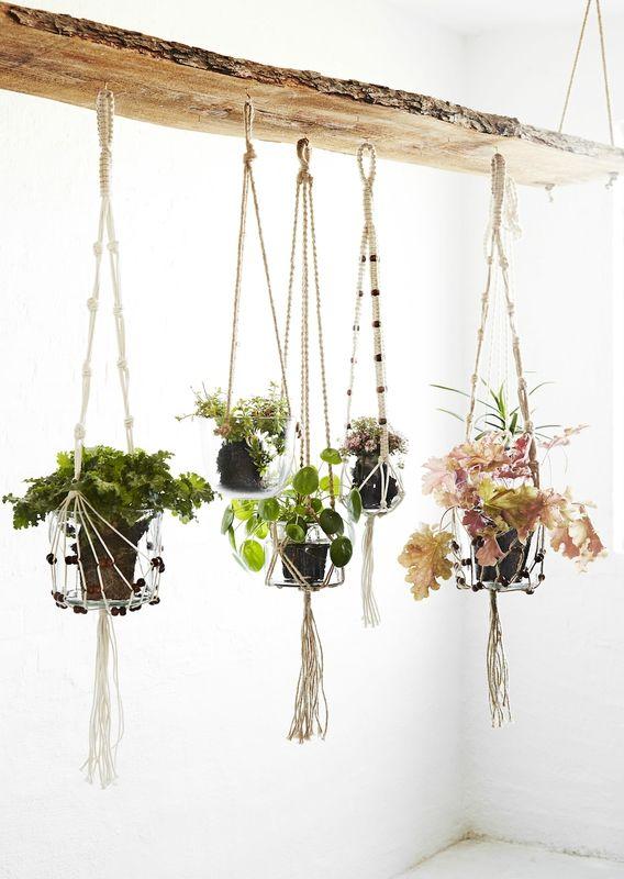 Les Nouveauts My Bohem Merci Ginette Plant Deco
