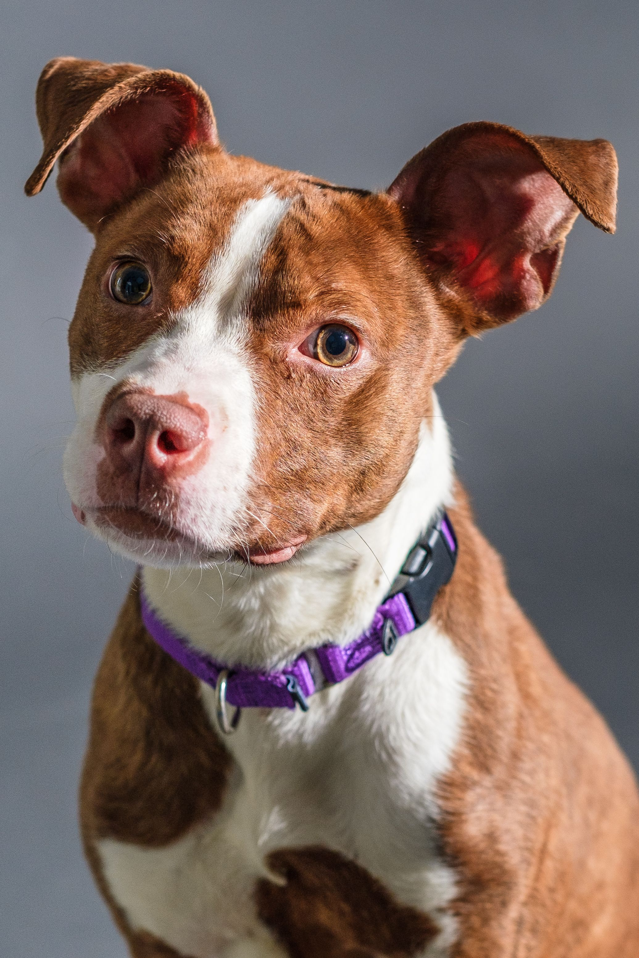 Adopt Marnie Reduced Adoption Fee 50 On Dogs Adoption Dogs