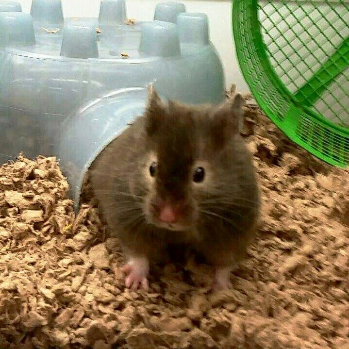 I Saw This Cutie At Petco Today 9 29 15