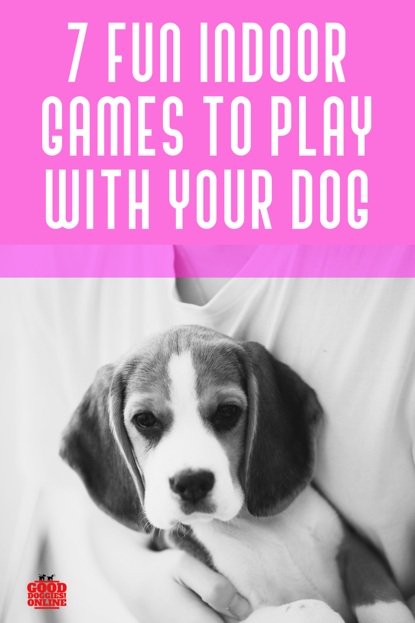 Seven Fun Games to Play with Your Dog Indoors (With images