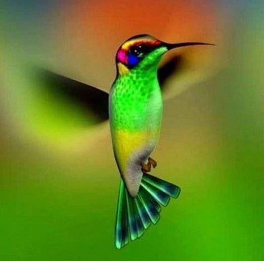 Oiseau mouche aux couleurs irr alistes animaux for Oiseau couleur