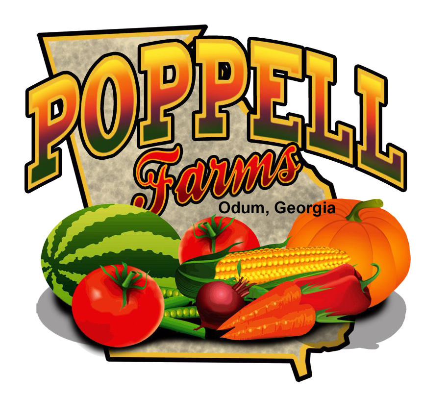 Explore the Corn Maze and pick the perfect pumpkin at Poppell Farms in Odum, GA!