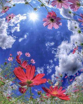 9 Dawnさん Dawnclark6 Twitter In 2020 Beautiful Nature Flower Landscape Nature Photography