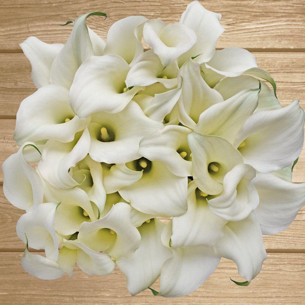 Mini Callas White Chrystal Pack 80 stems EbloomsDirect