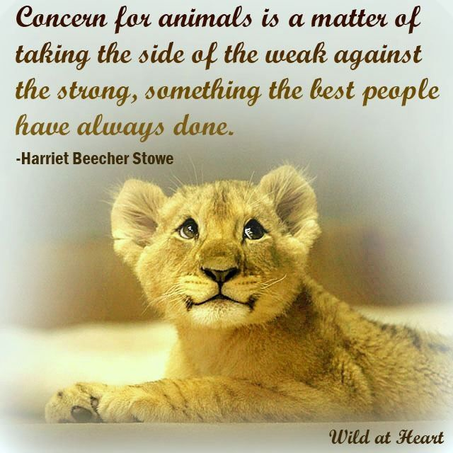 Quotes About Protect Animals Quotes Animals Cats Cat Quotes