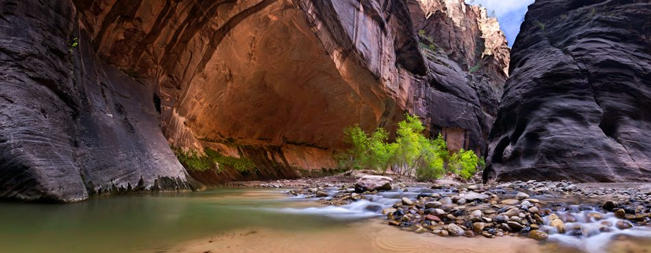 Oasis in the Narrows, Zion National Park, Utah