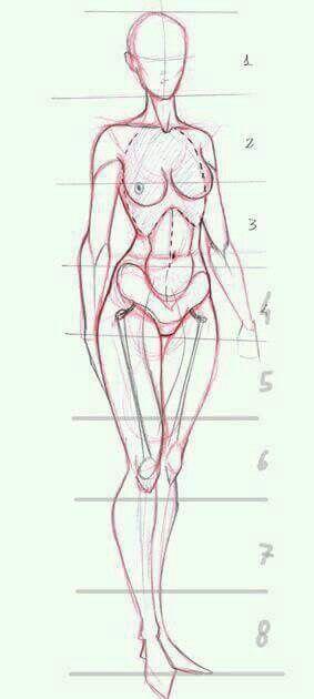 Woman anatomy   drawing   Pinterest
