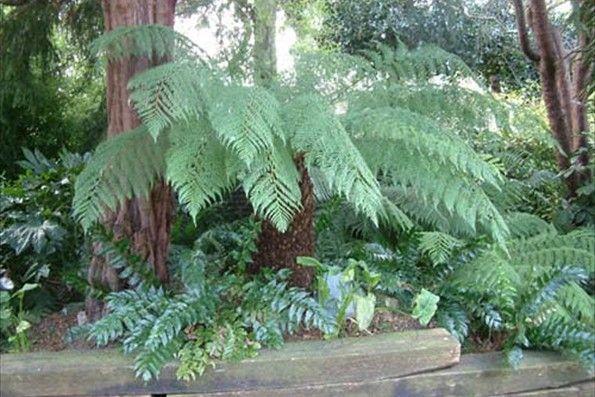 tropical tree uk Google Search Tropical garden Pinterest