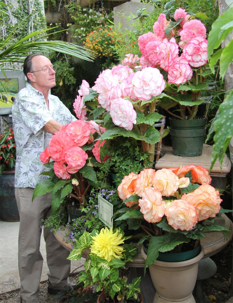 Flower Tuberous Begonia   The grower Pau Carlisle adjusting the ...