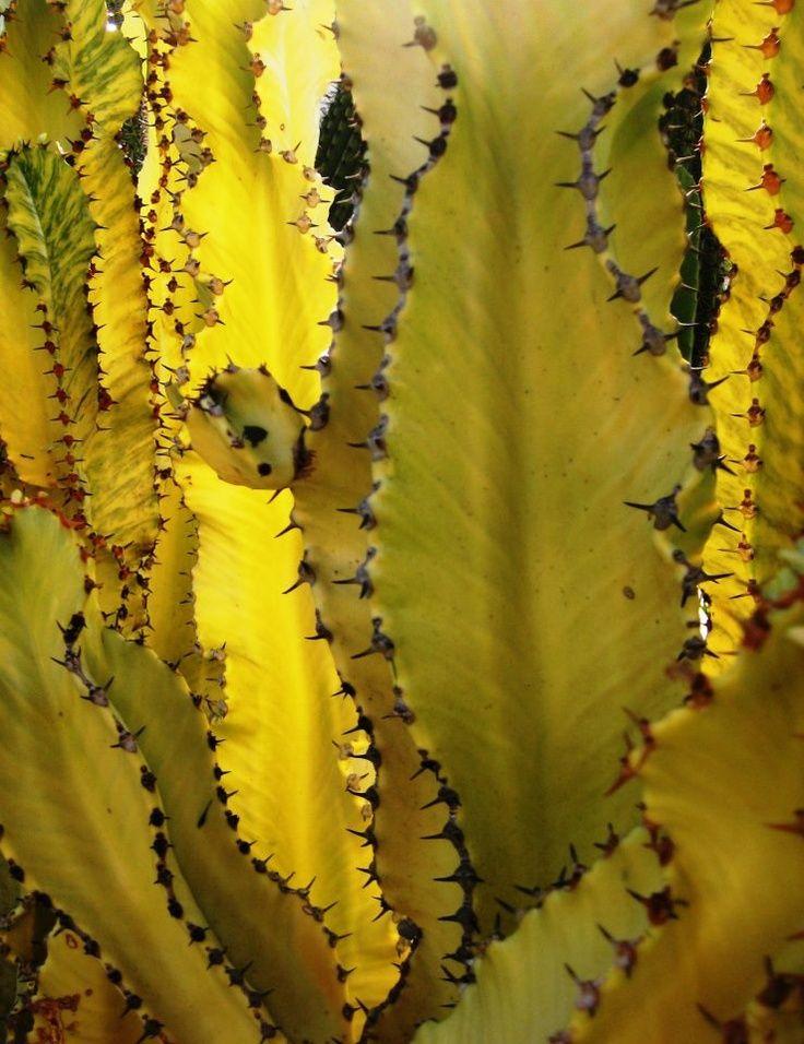The Common Thread Jardin De Cactus Fleur Jardin Et Plantes Grasses