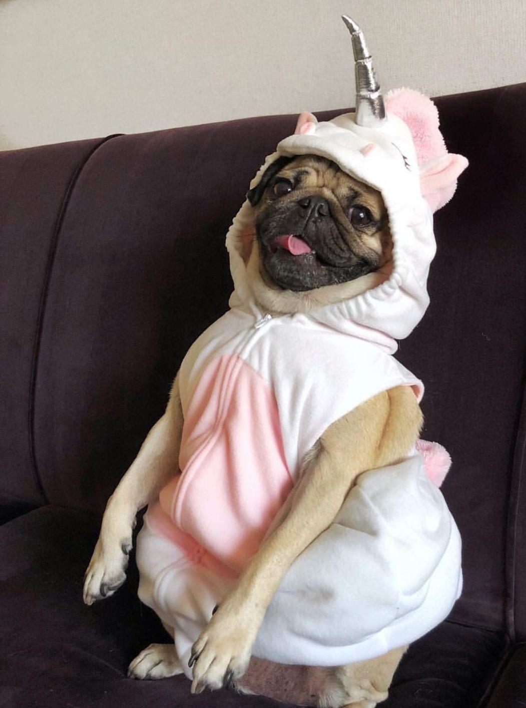 dc6100e8d Pugicorn Doug The Pug, Animal Dress Up, Bizarre, Pekingese, Pug Life,