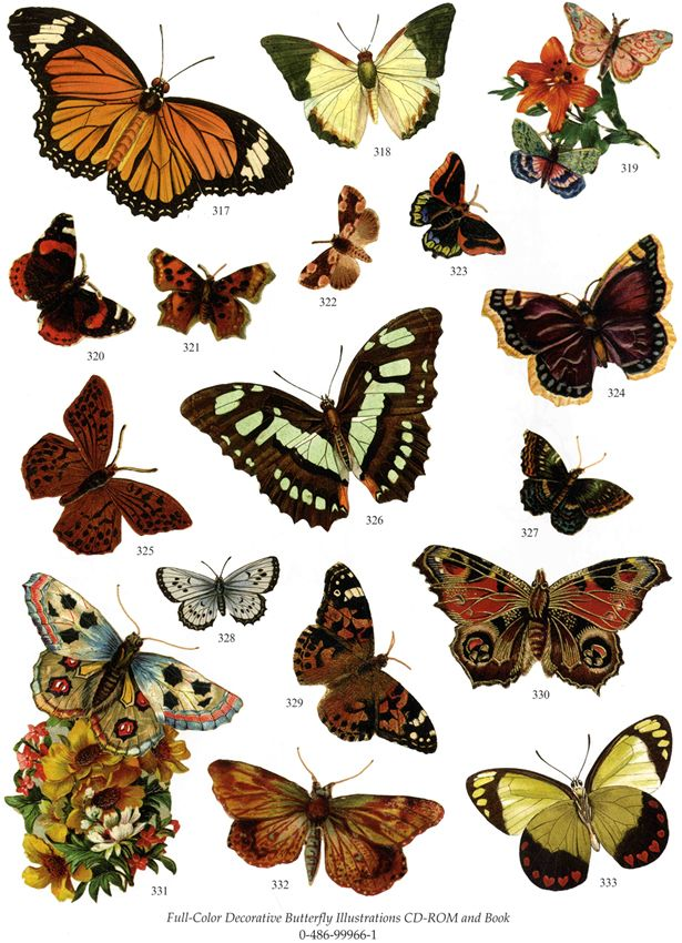 Butterflies Samples from  Dover's Greatest Clips CD-ROM and Book: Volume II
