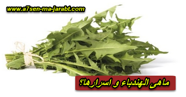 ما هي الهندباء و اسرارها Vegetables Cabbage Food