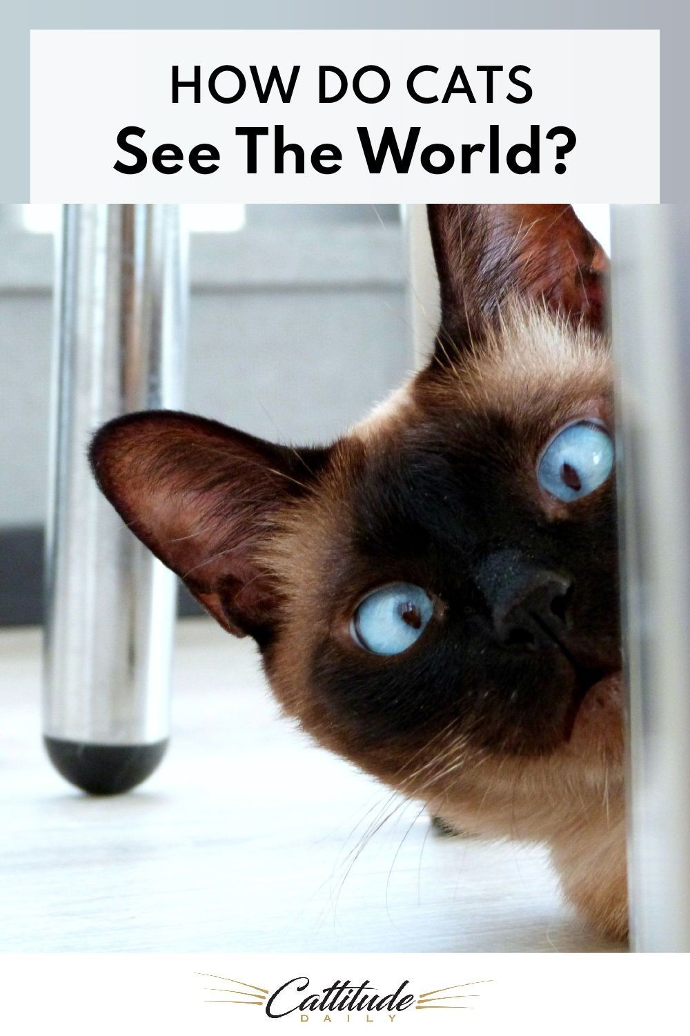 How Do Cats See The World? in 2020 Cats, Cat questions