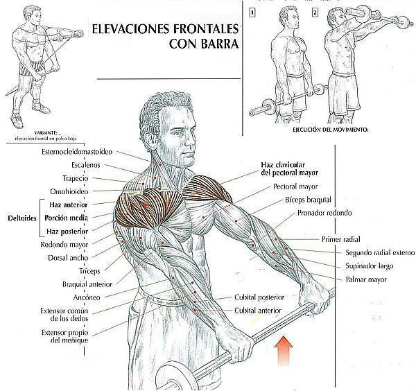musculos que se trabajan segun ejercicio   gym   pinterest