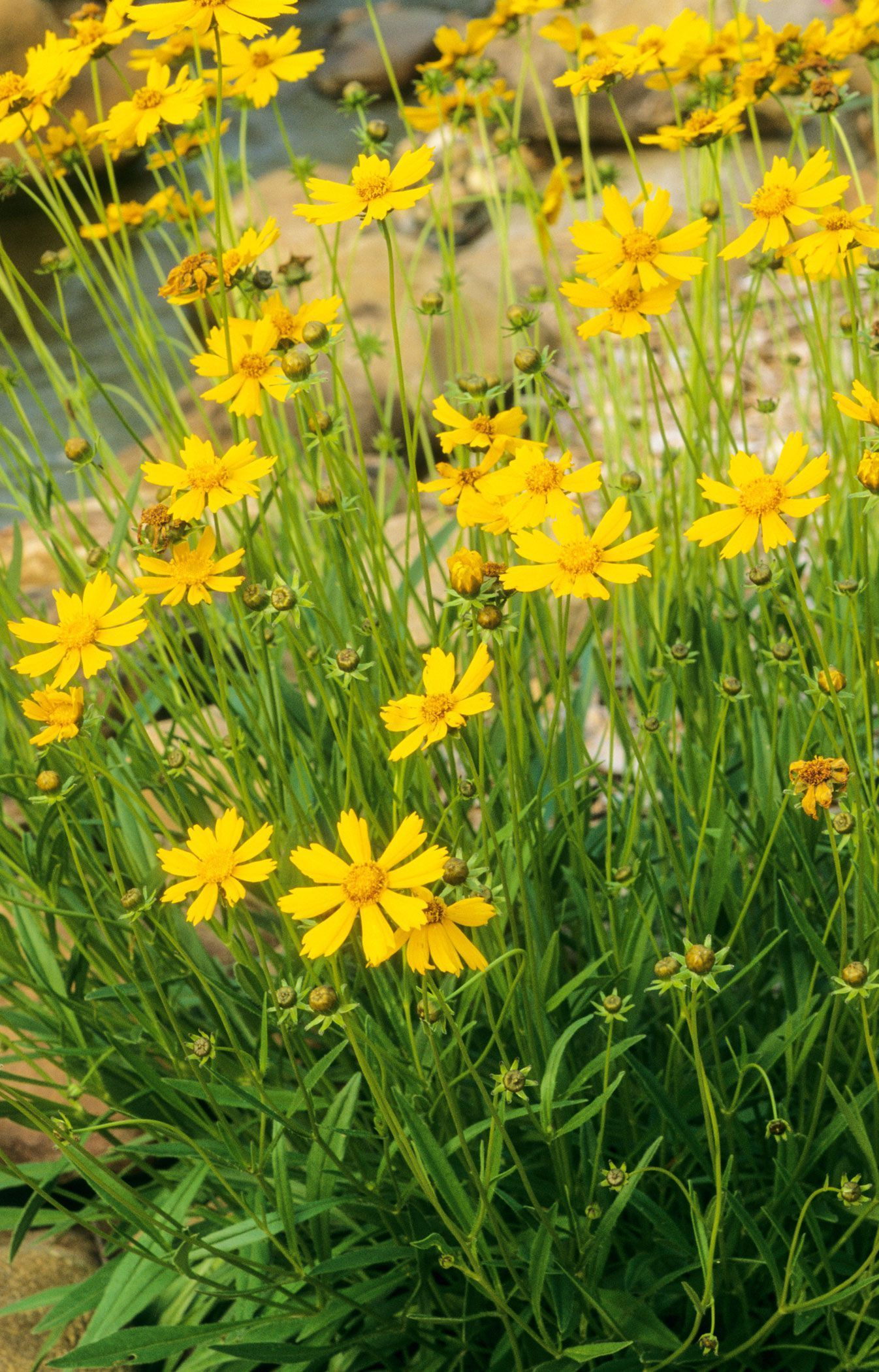 20 Perennial Flowers You Should Consider Putting In Your Yard