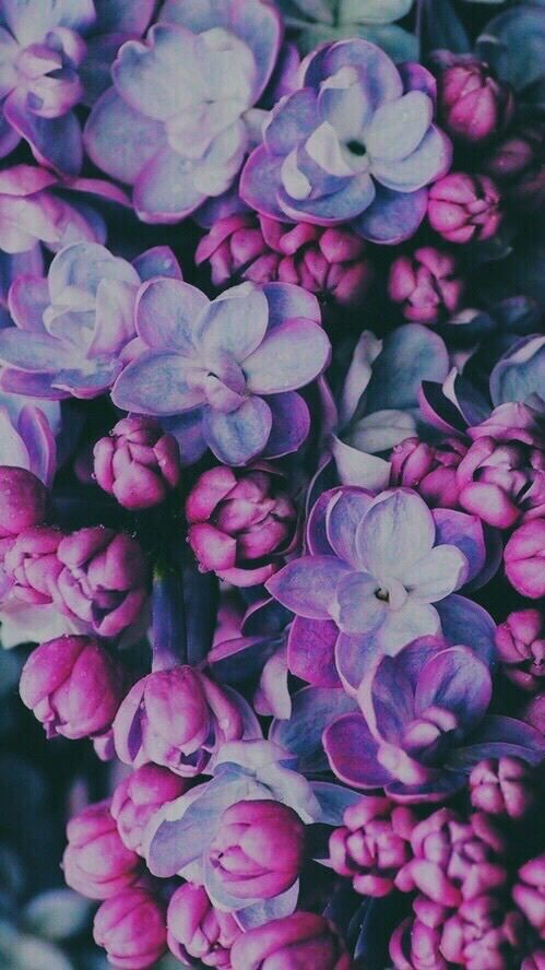 Immagine Di Flowers Purple And Wallpaper Wallpapers I Love