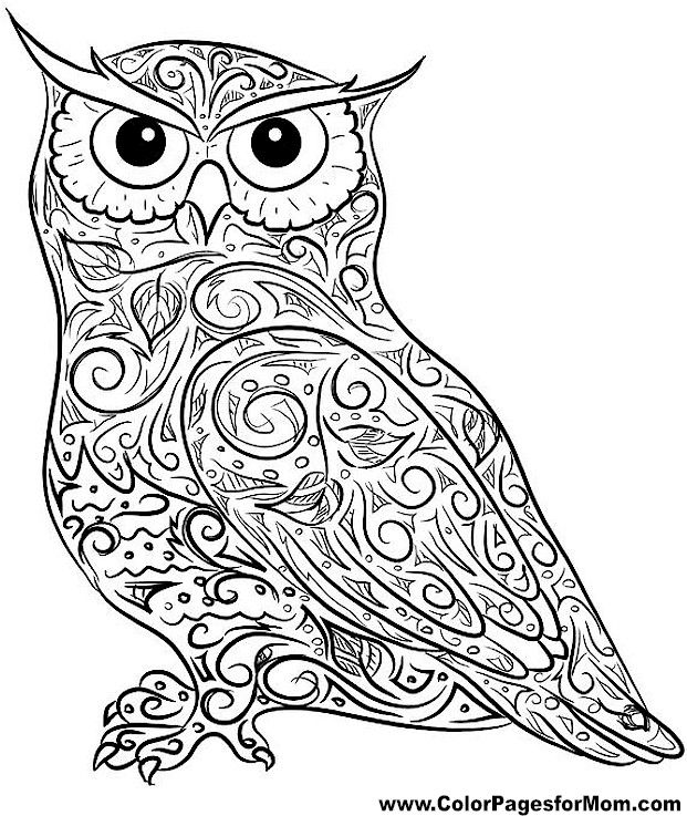 Owl Coloring Page 4  coloring pages owls y otros  Pinterest