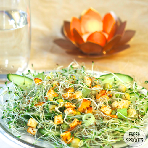 Alfalfa Pea And Red Clover Sprouts Mixed With Fried Tofu Spring Onion And Cucumber Freshsprouts D Sprout Recipes Alfalfa Sprouts Recipes Healthy Cook Books
