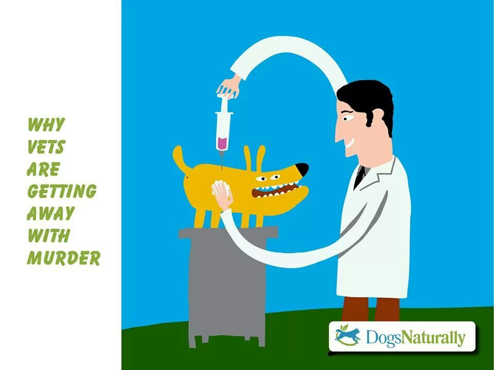 Great info on your pets health dogs naturally magazine