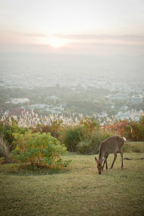 Mt. Wakakusa, Nara Japan : yocca