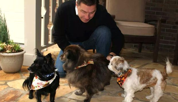Hotel Hopes Guests Head Home With A Rescue Dog Dog Hotel Dog