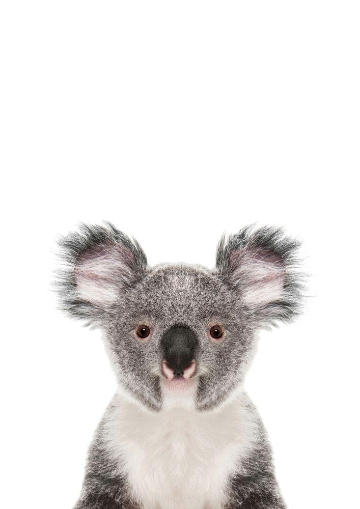Koala Bear Mini Art Print By Lotus Print Studio Without Stand 3 X 4 In 2020 Baby Animal Prints Koala Bear Koala