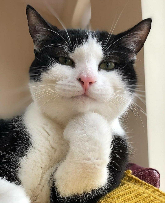 Pin Oleh Nendy Tise Lovion Di Empus Kucing Himalaya Foto Kucing Lucu Bayi Hewan