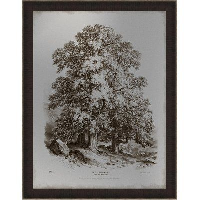 Ashton Wall Décor LLC \'Sepia Sycamore Tree\' Framed Graphic Art ...