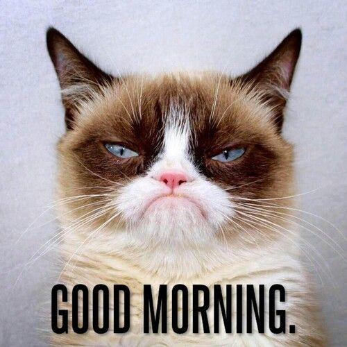Good Morning Grump Cat Funny Grumpy Cat Memes Grumpy Cat