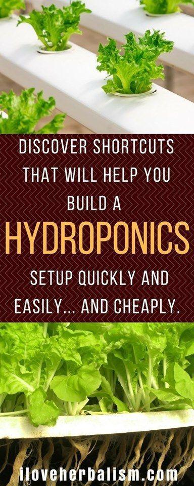 #Gardening: Wie man einen Hydroponikgarten baut #Hydroponikgarten für Anfänger …   – hydroponic gardening