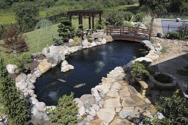 Gunite Koi Pond With Black Plaster Koi Pond Koi Pond Design Pond Design