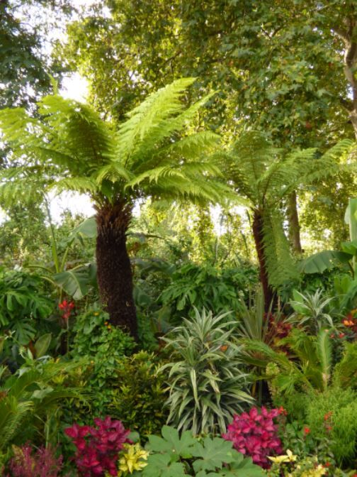 tropische Pflanzen im St James Park, London - Foto: S. Hopp ...